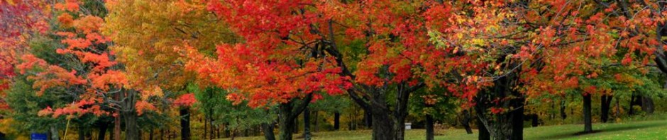 cropped-fall-foliage